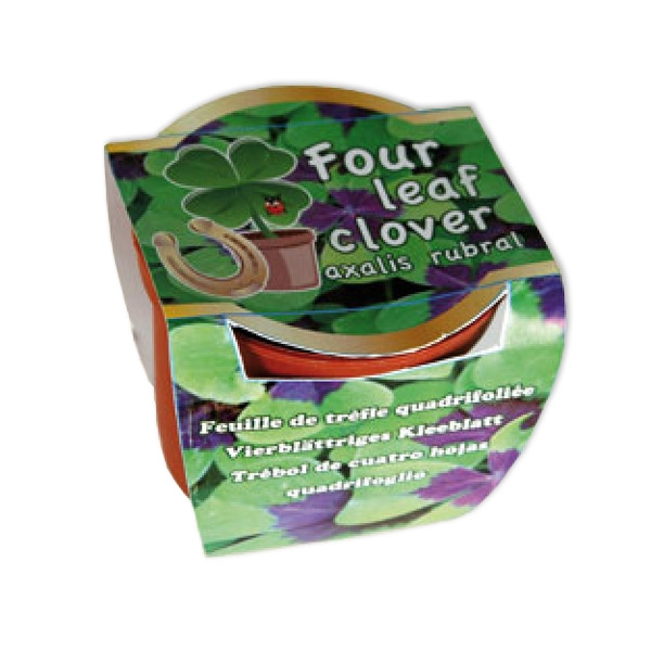 Glücksklee-Topf +Zubehör zum Selberzüchten, Vierblättriges Kleeblatt
